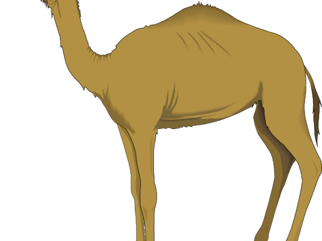 jpg library library Camels free on dumielauxepices. Camel clipart decorated.