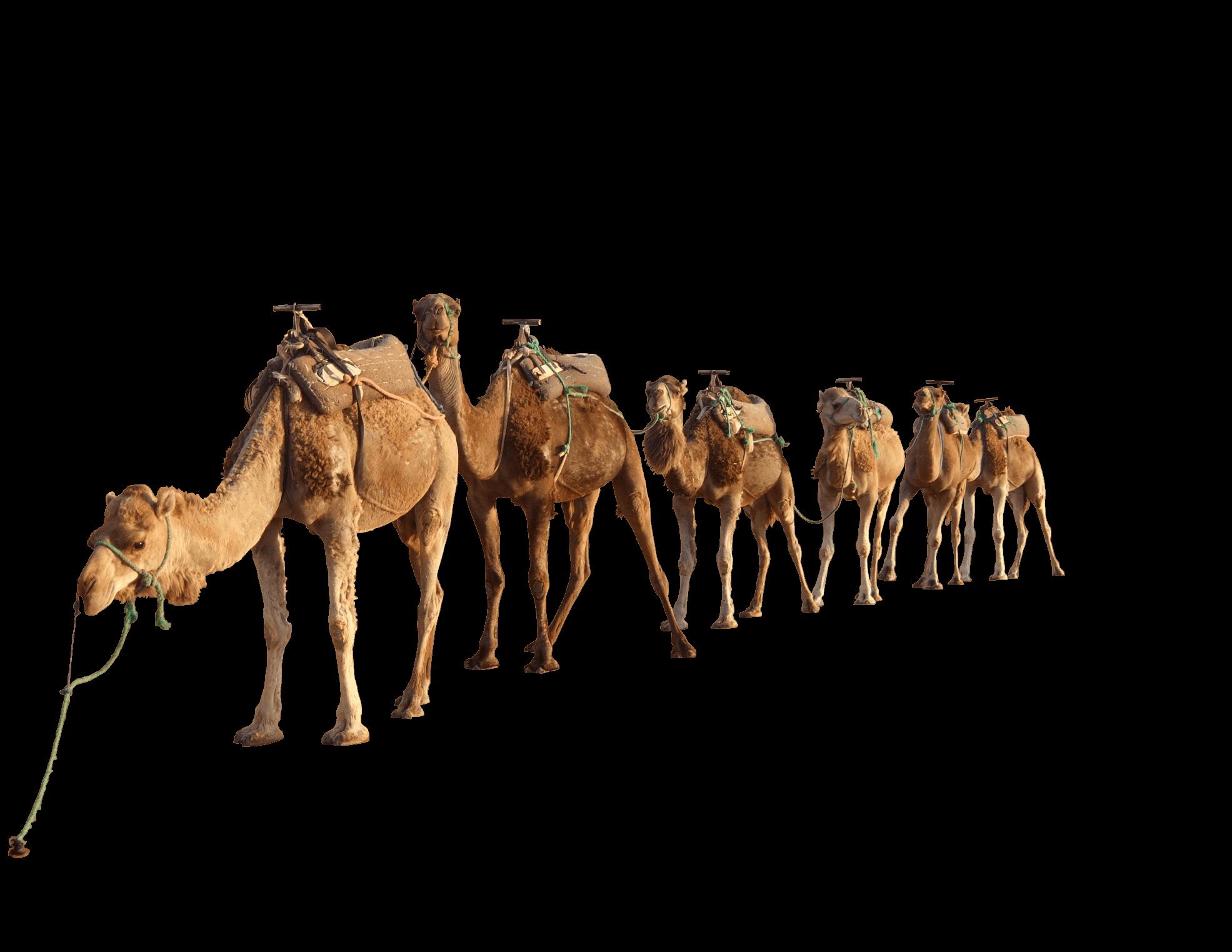 freeuse Camels In The Desert PNG Transparent Camels In The Desert