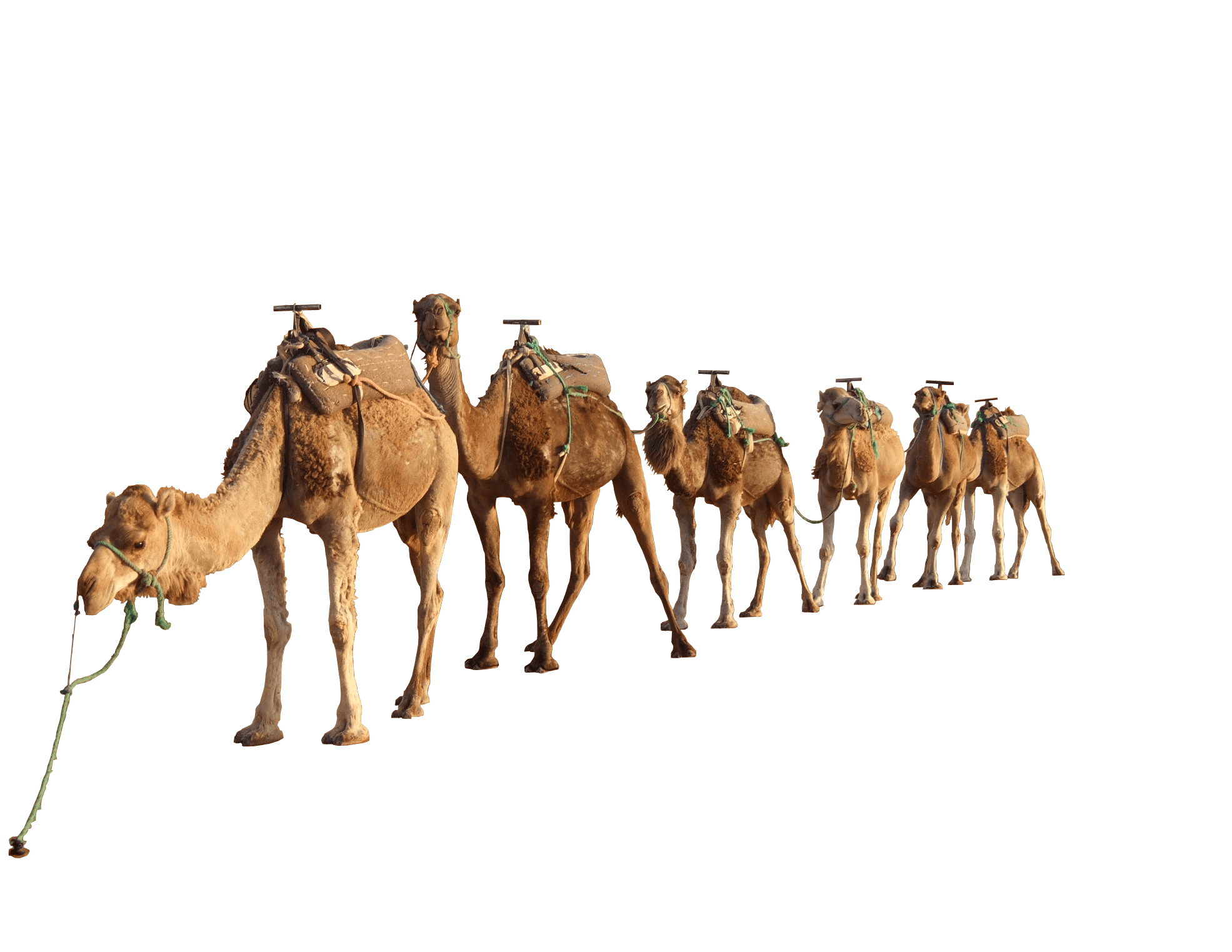clipart free library Camel Group
