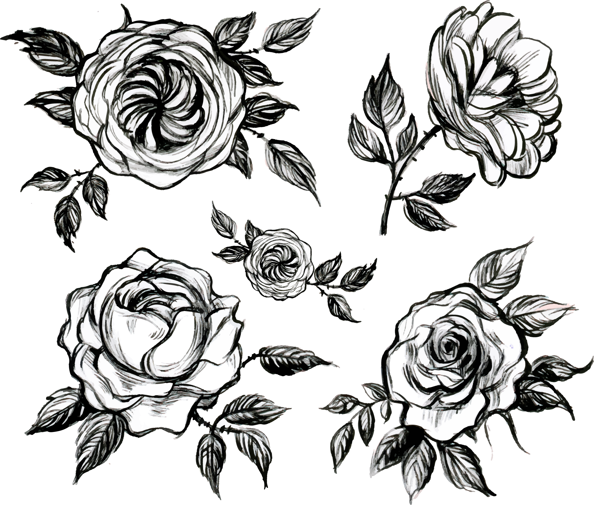 clip art transparent library Visual arts Floral design White Rose