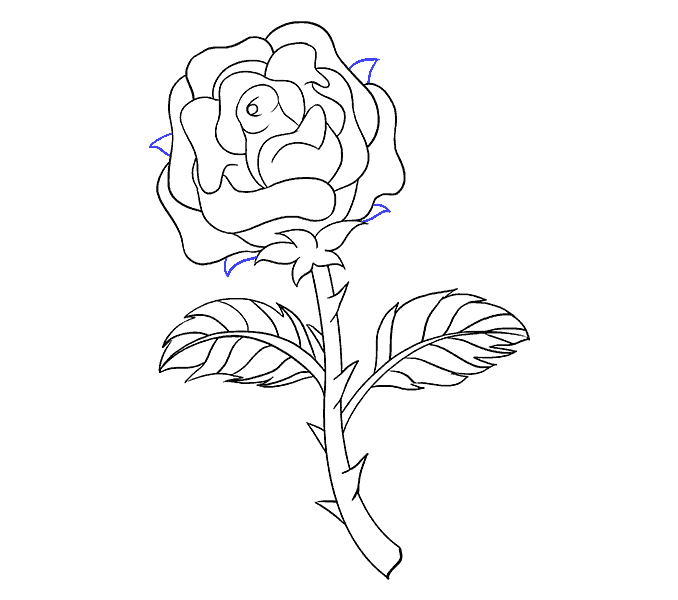 graphic library download Rose Steps Drawing at GetDrawings