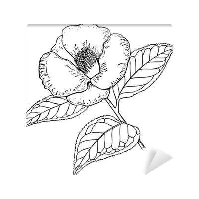 clipart royalty free Fototapete Zweig der Pflanze Camellia japonica