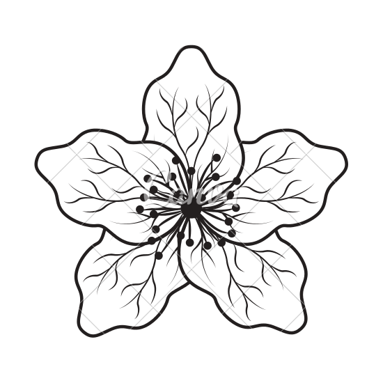 svg transparent library Japanese Flower Drawing at GetDrawings