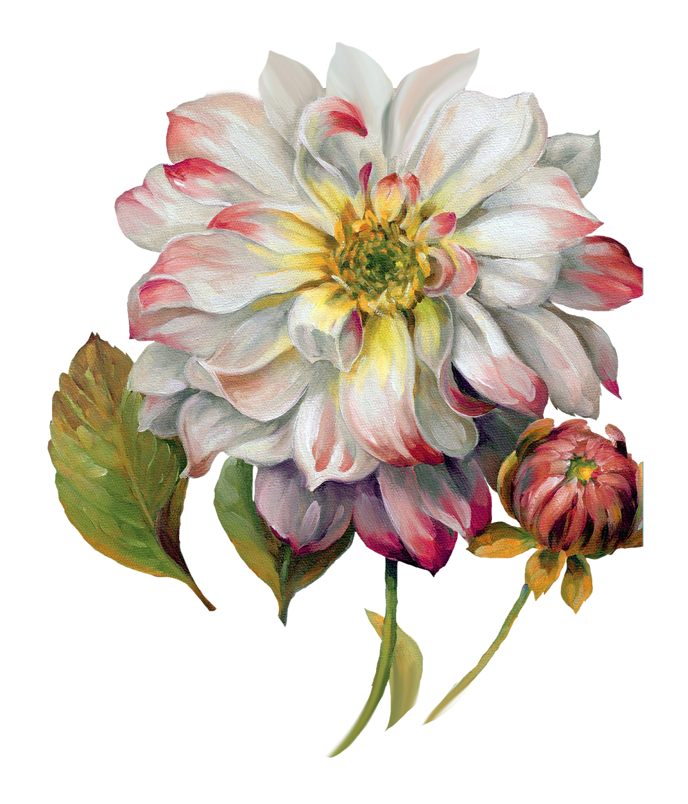 image library stock zinnia drawing pastel #119031172