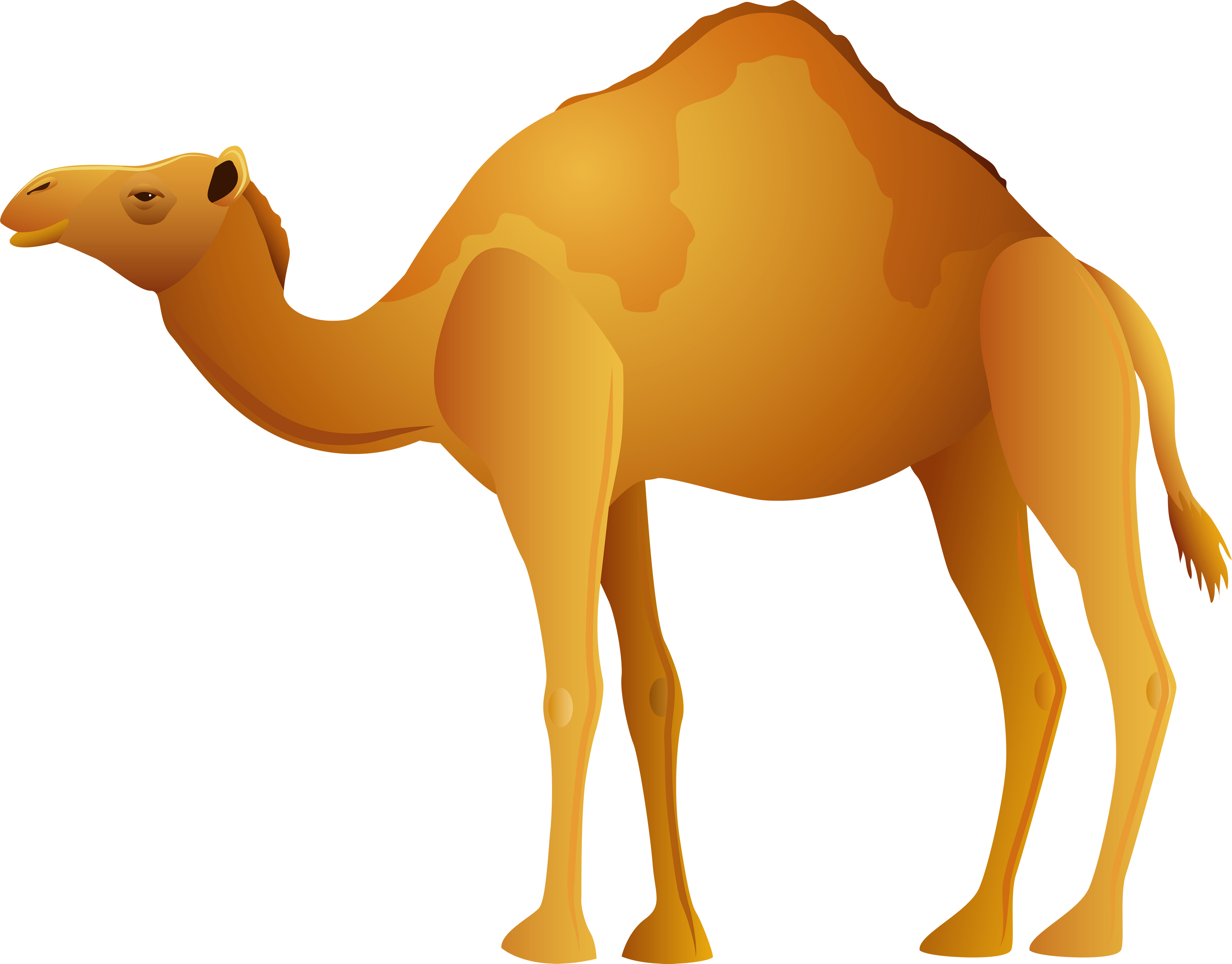 image freeuse Collection of free Dromedaries clipart bactrian camel