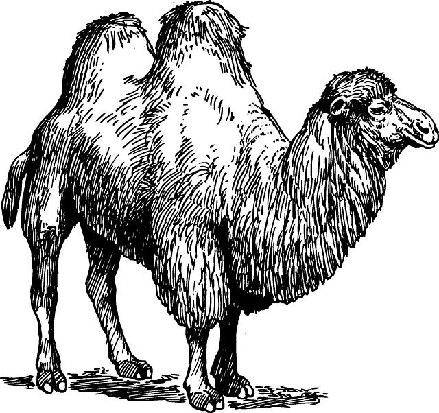 stock Free Image on Pixabay