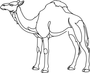 royalty free Collection of free Camel drawing
