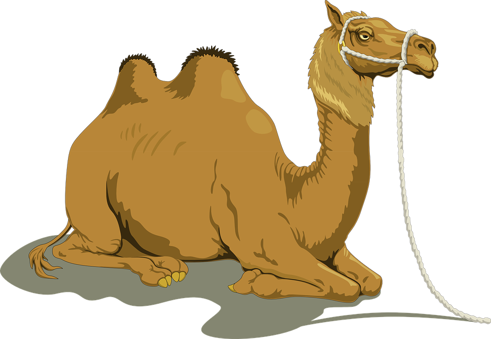 free download Collection of free Humped clipart camel