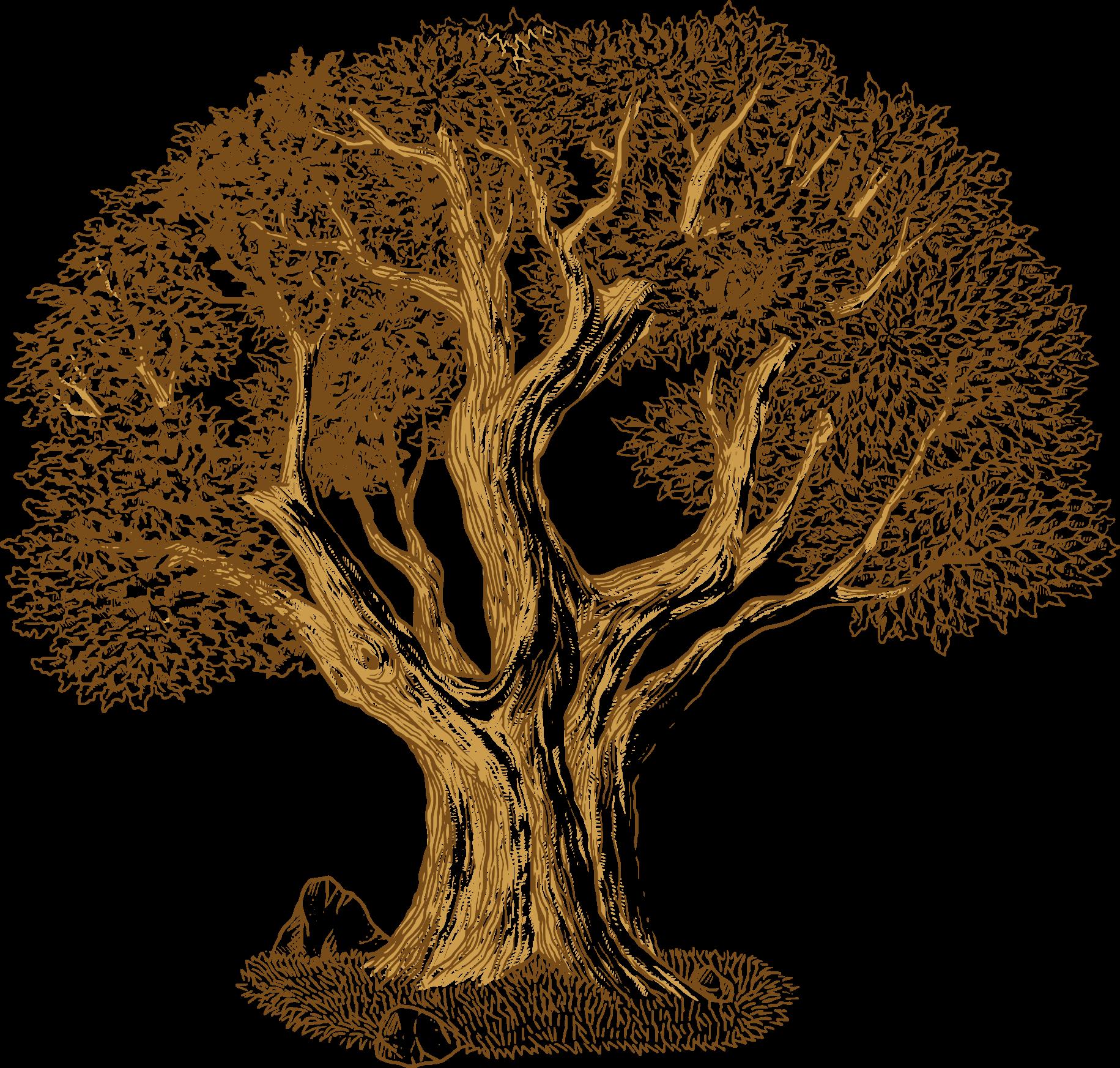 clip art transparent Euclidean vector Tree Southern live oak