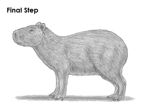 picture transparent download How to Draw a Capybara
