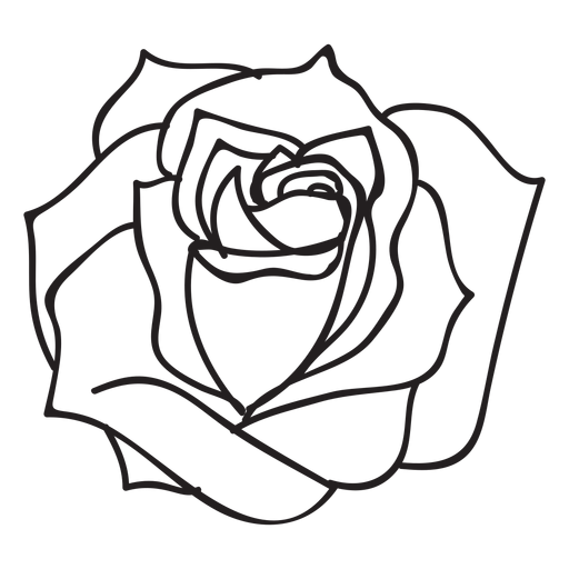 picture black and white Banners drawing rose. Blooming at getdrawings com