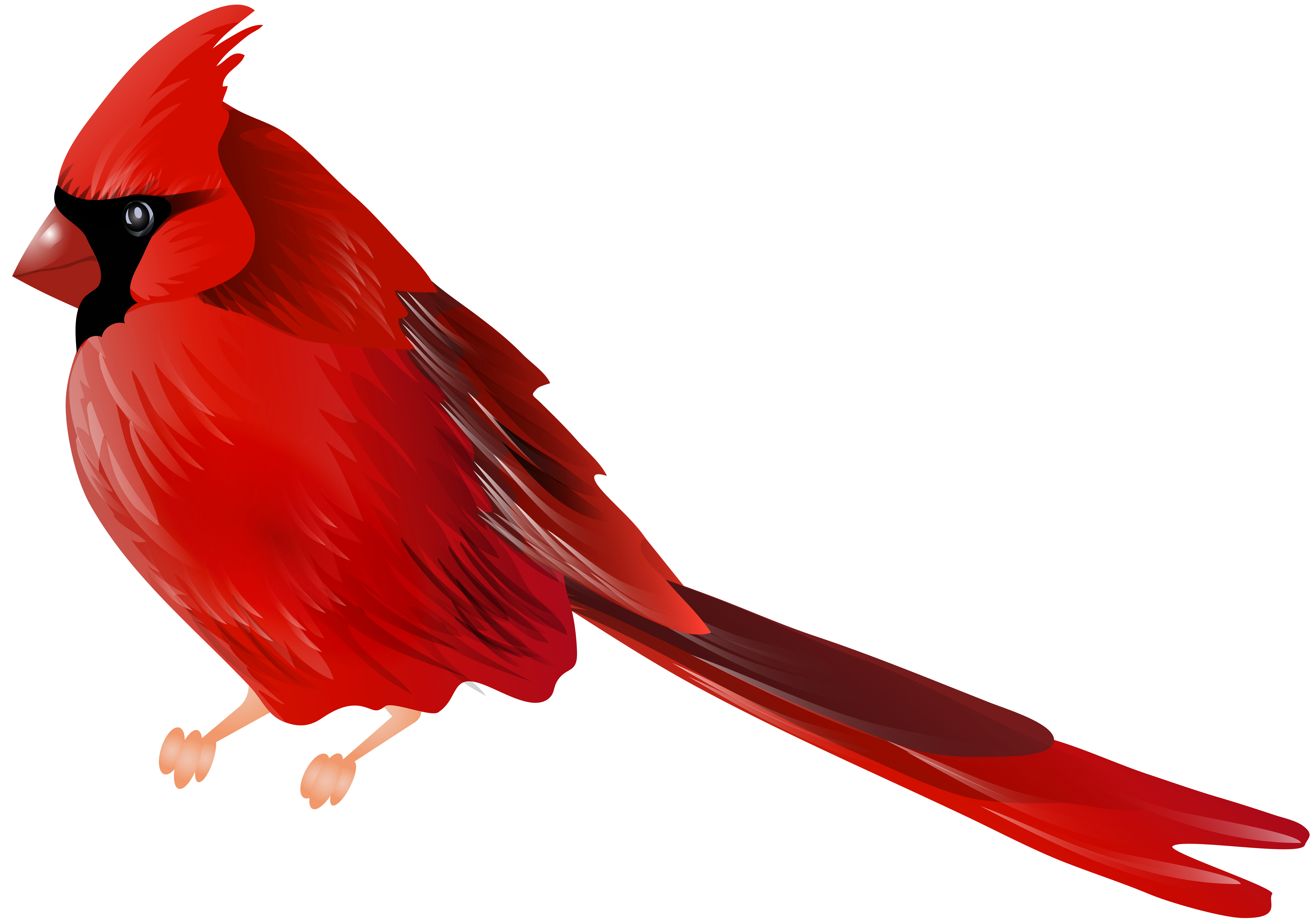 picture library download Bird png clip art. Cardinal clipart