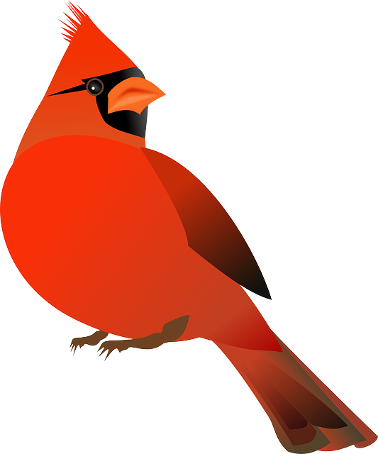 vector freeuse Cardinal clipart. Free image on pixabay
