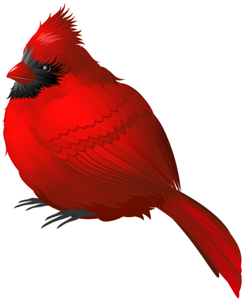 picture library download Red winter bird png. Cardinal clipart.