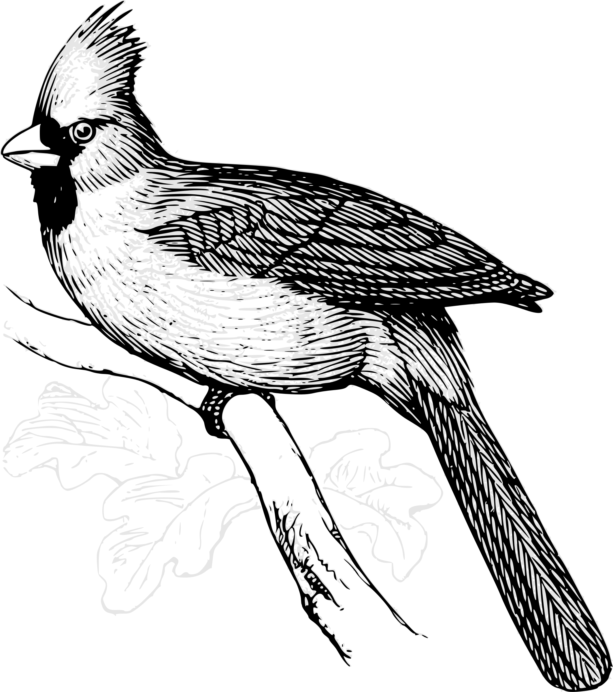 banner library download Cardinal clipart black and white. Bird line art.