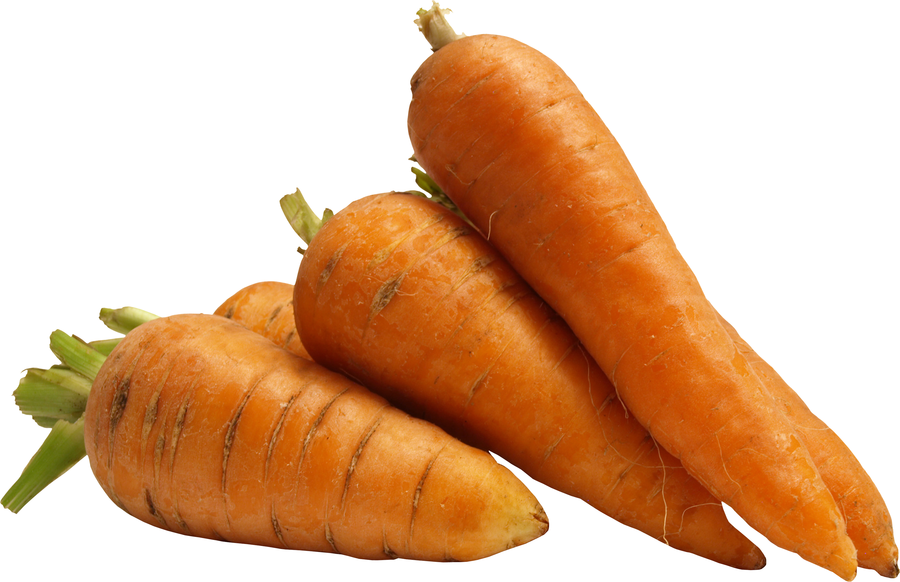 clipart library stock Carrot PNG Image