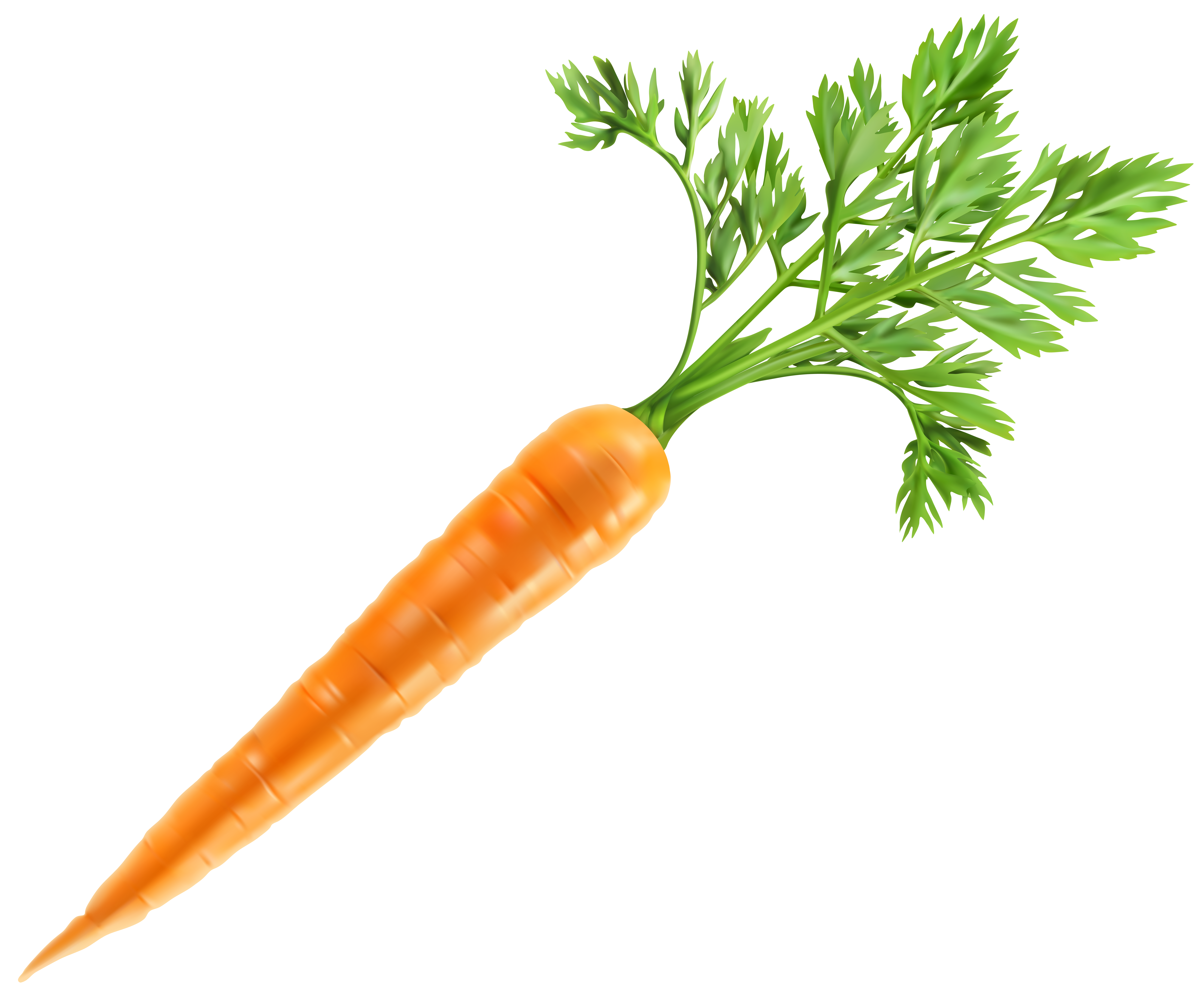 image free download Fresh Carrot PNG Clip Art Image