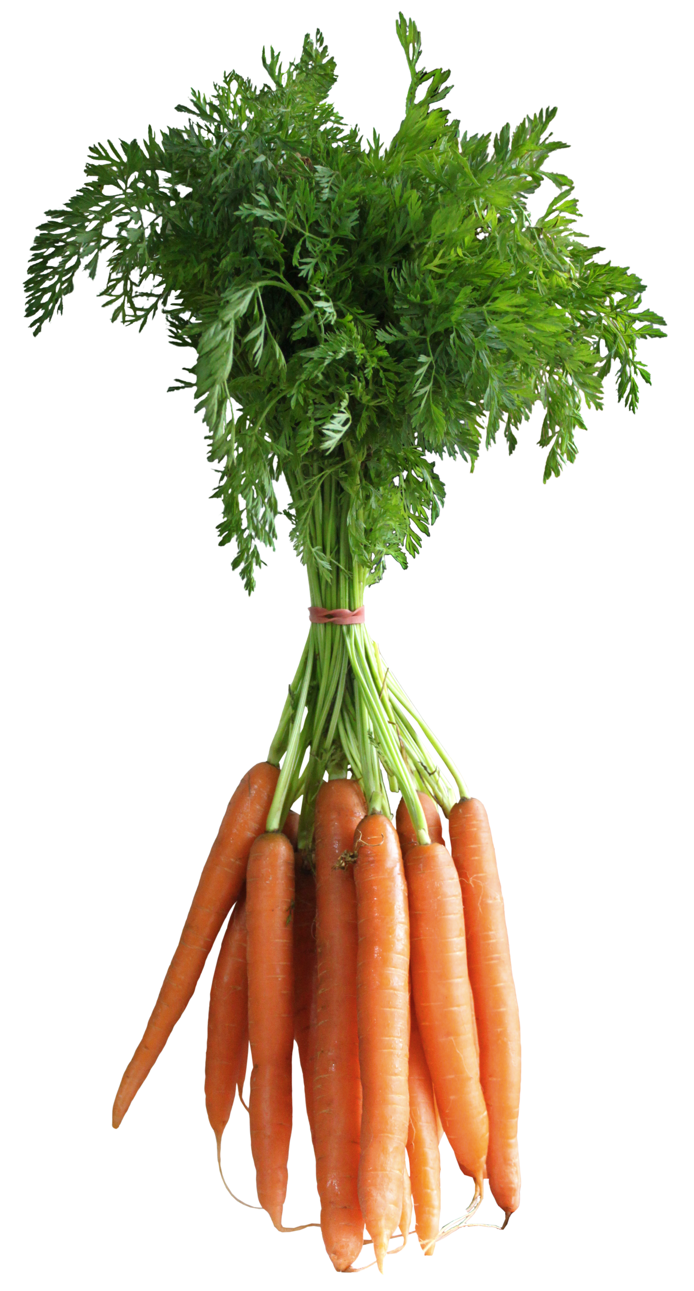 banner freeuse stock Vector carrot green vegetable.  carat to you
