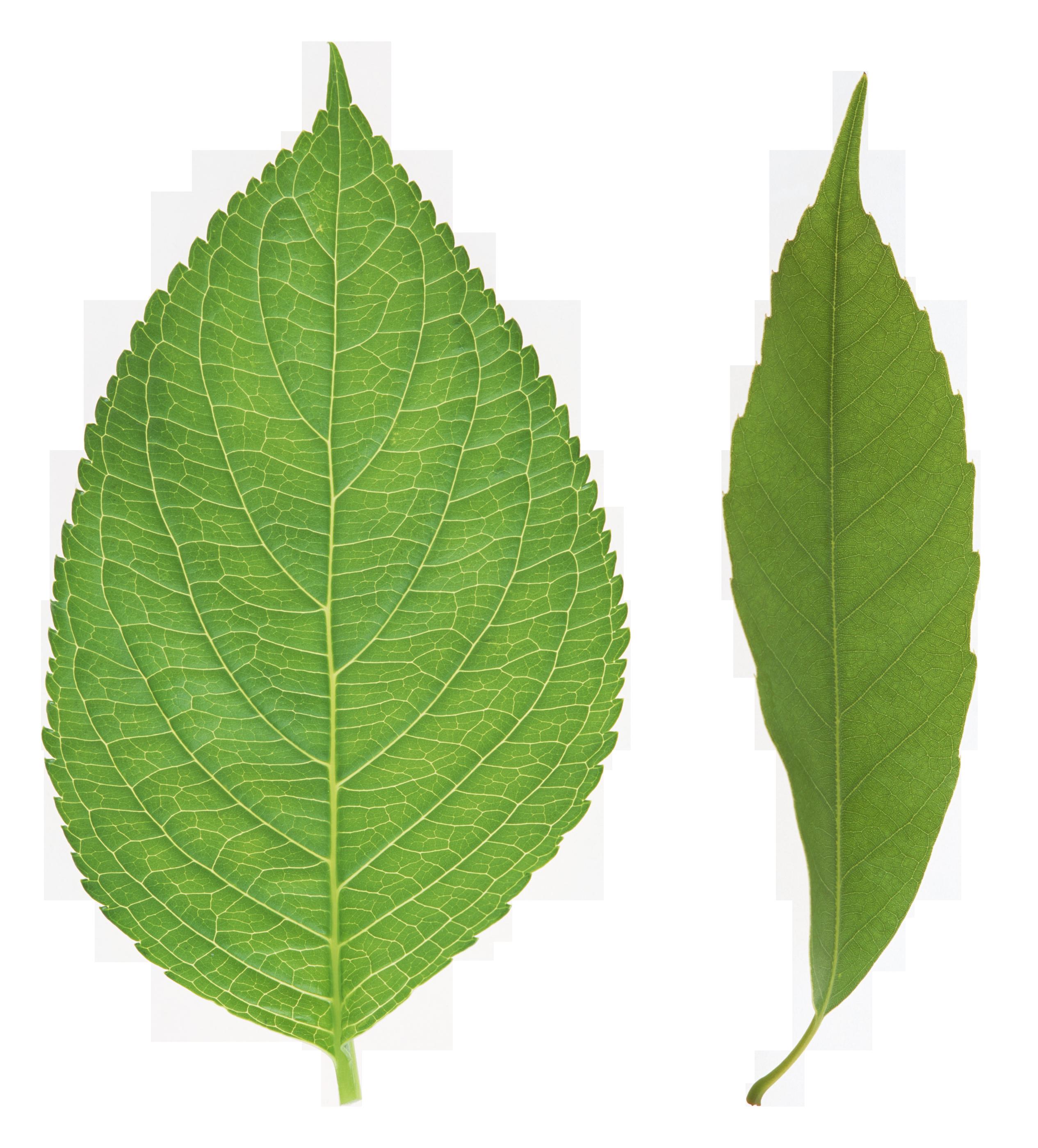 vector Green Leaves Nine
