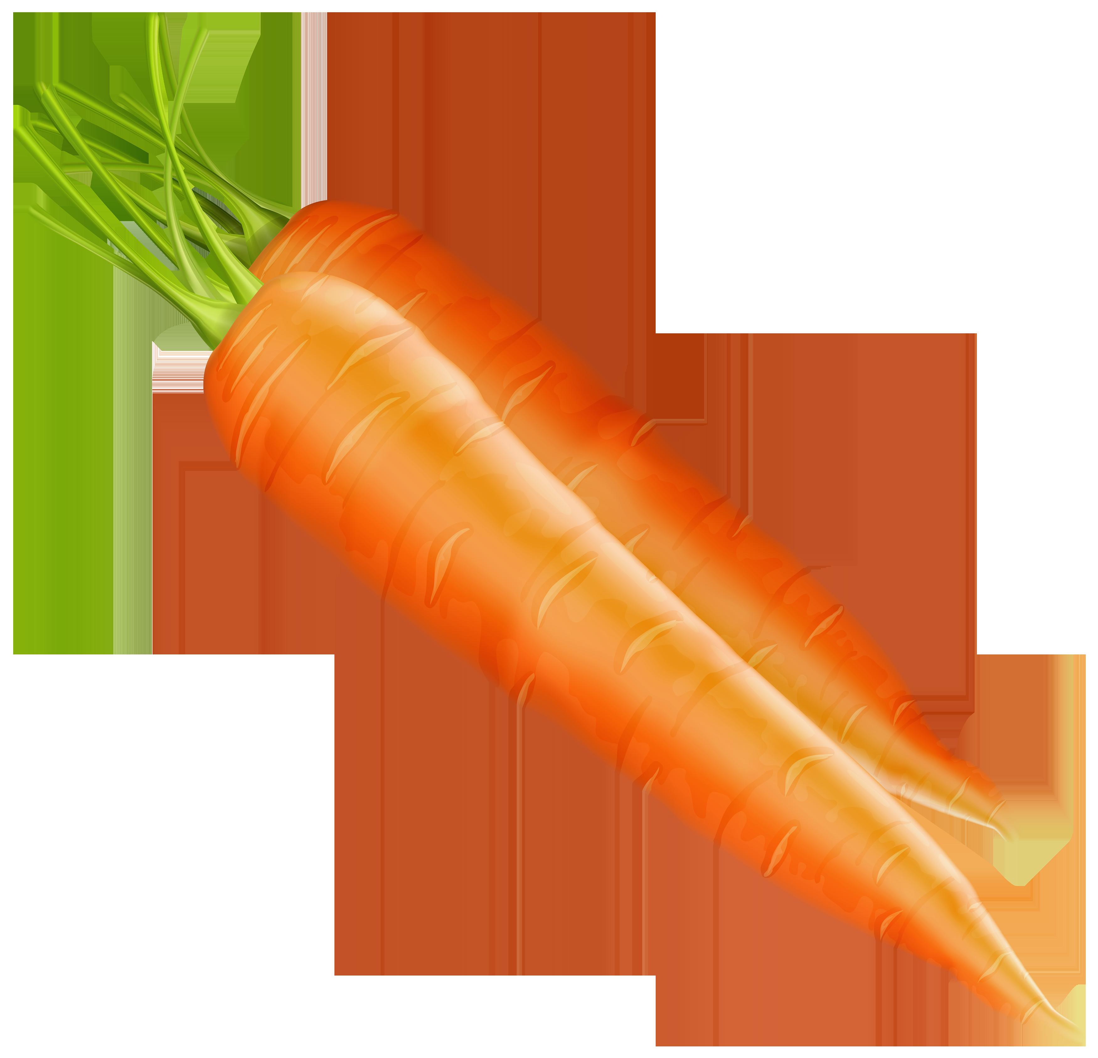 svg freeuse download Carrots clipart. Png best web