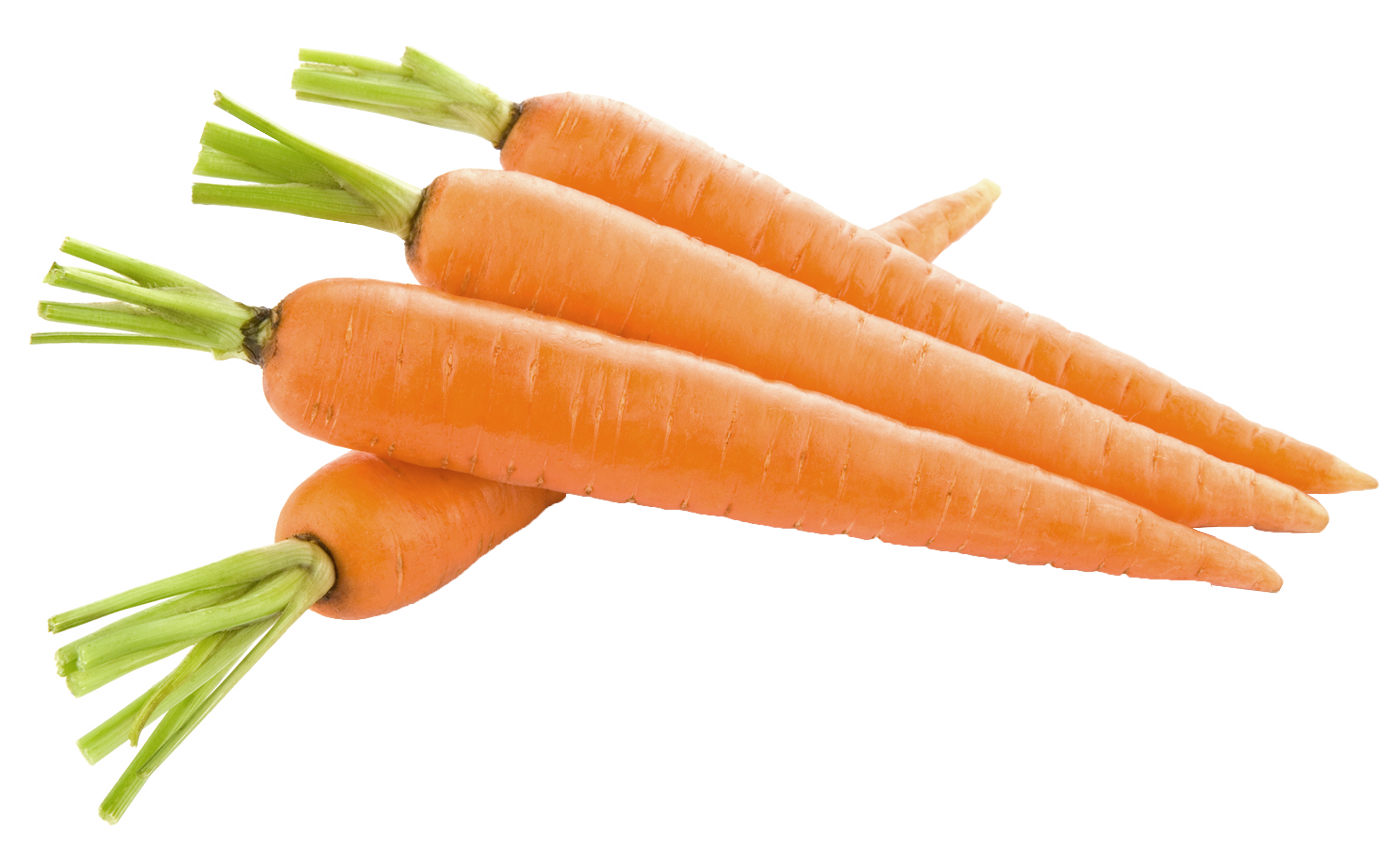 clip art royalty free stock Carrots png picture gallery. Transparent carrot