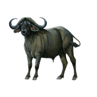 svg freeuse library Carts clipart buffalo. Download free png photo.