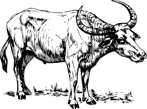 clipart library stock Bulls free on dumielauxepices. Carts clipart buffalo.