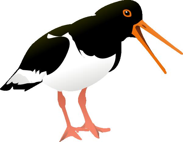 jpg transparent stock Oyster Catcher Bird Clip Art at Clker