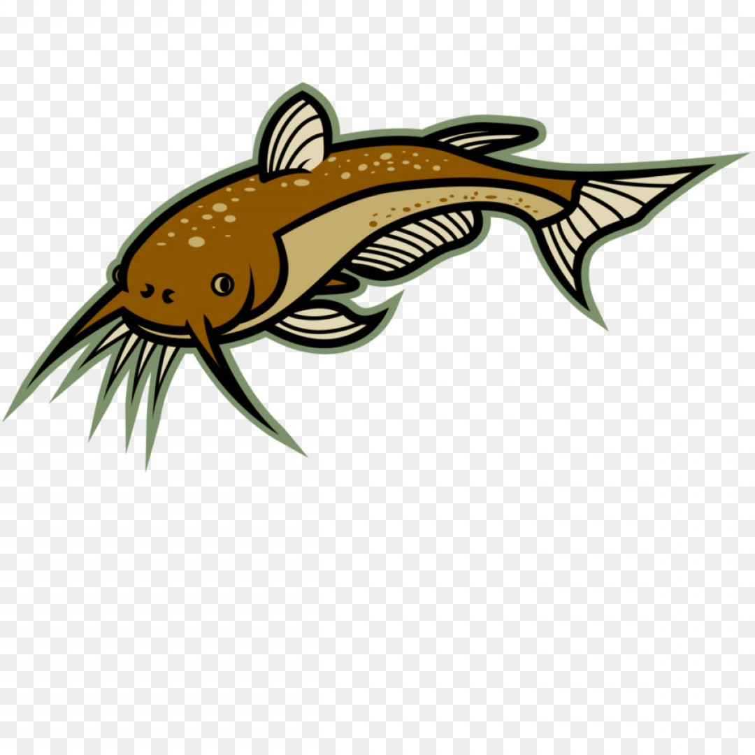 graphic library stock Png clip art cliparts. Catfish clipart.