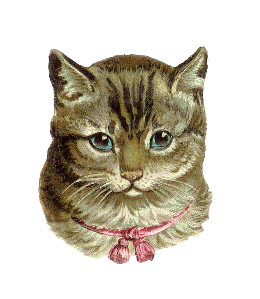 image library download Cats clipart tabby. Grey cat from antique.