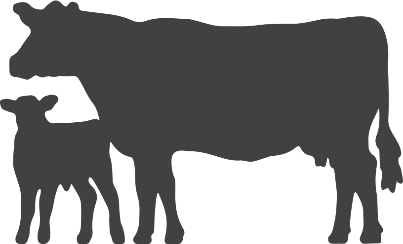 transparent download Cow silhouette png at. Longhorn clipart cattle drive.