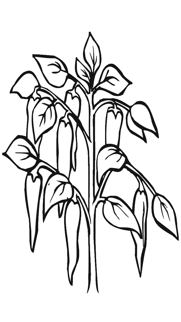 svg free Celery black and white clipart. Chilli drawing at getdrawings.