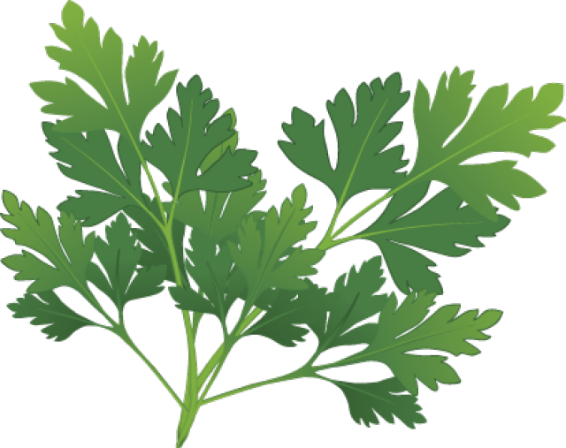 svg free download Graphic design pinterest herbs. Celery clipart watercolor.