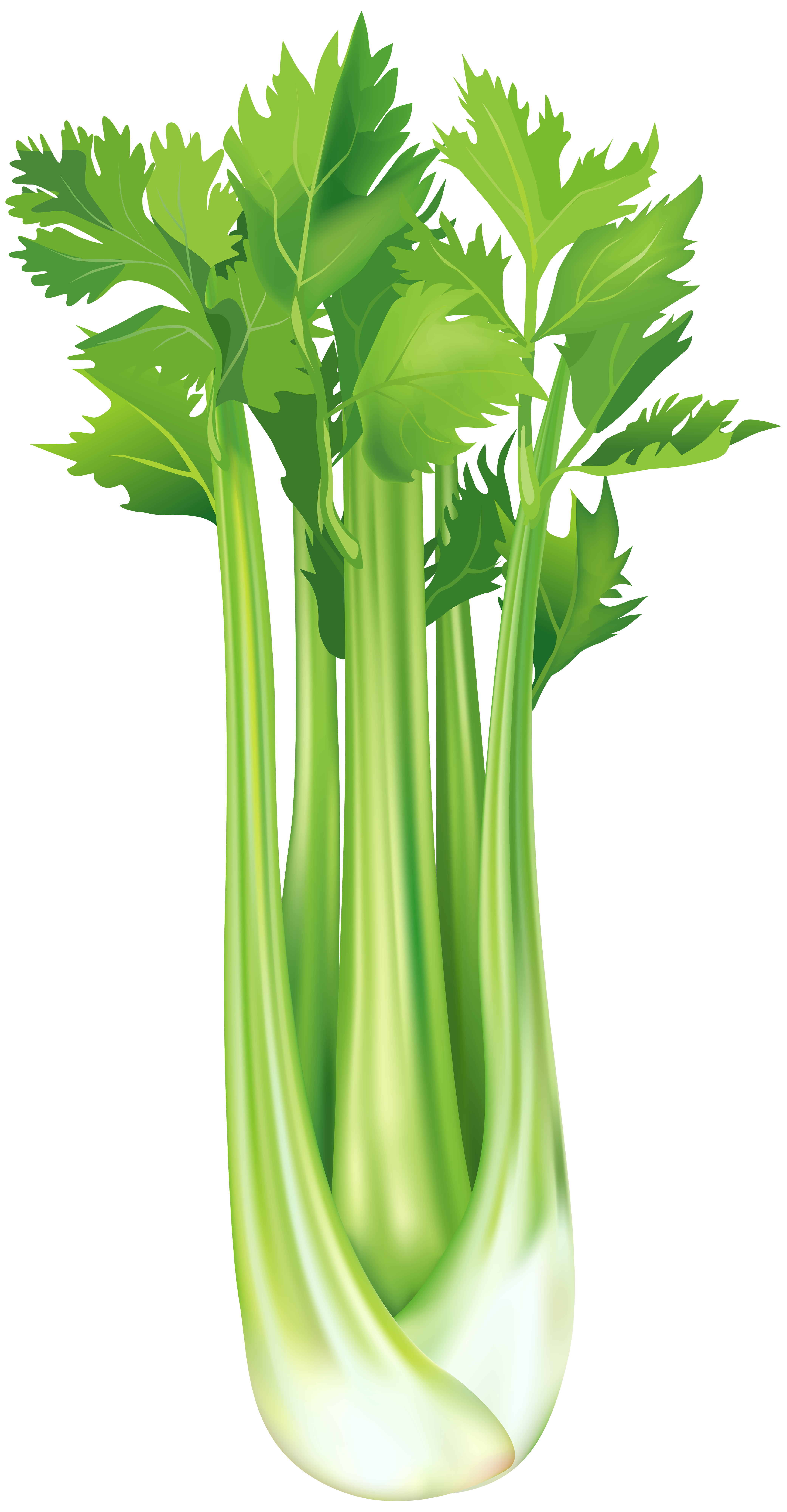 vector black and white library Celery clipart. Free png clip art.