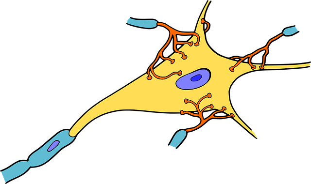 png freeuse stock Cell clipart biology student. Help educereschool com tutoring.