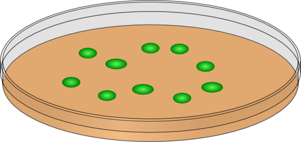 transparent Orange petri dish with. Cells clipart.