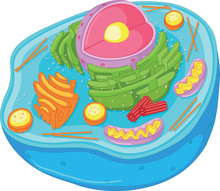 picture transparent download Cells clipart. Free animal cell cliparts.