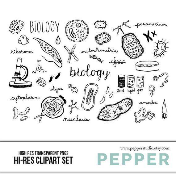 clipart freeuse download Cells clipart hand drawn. Biology doodle set hi.