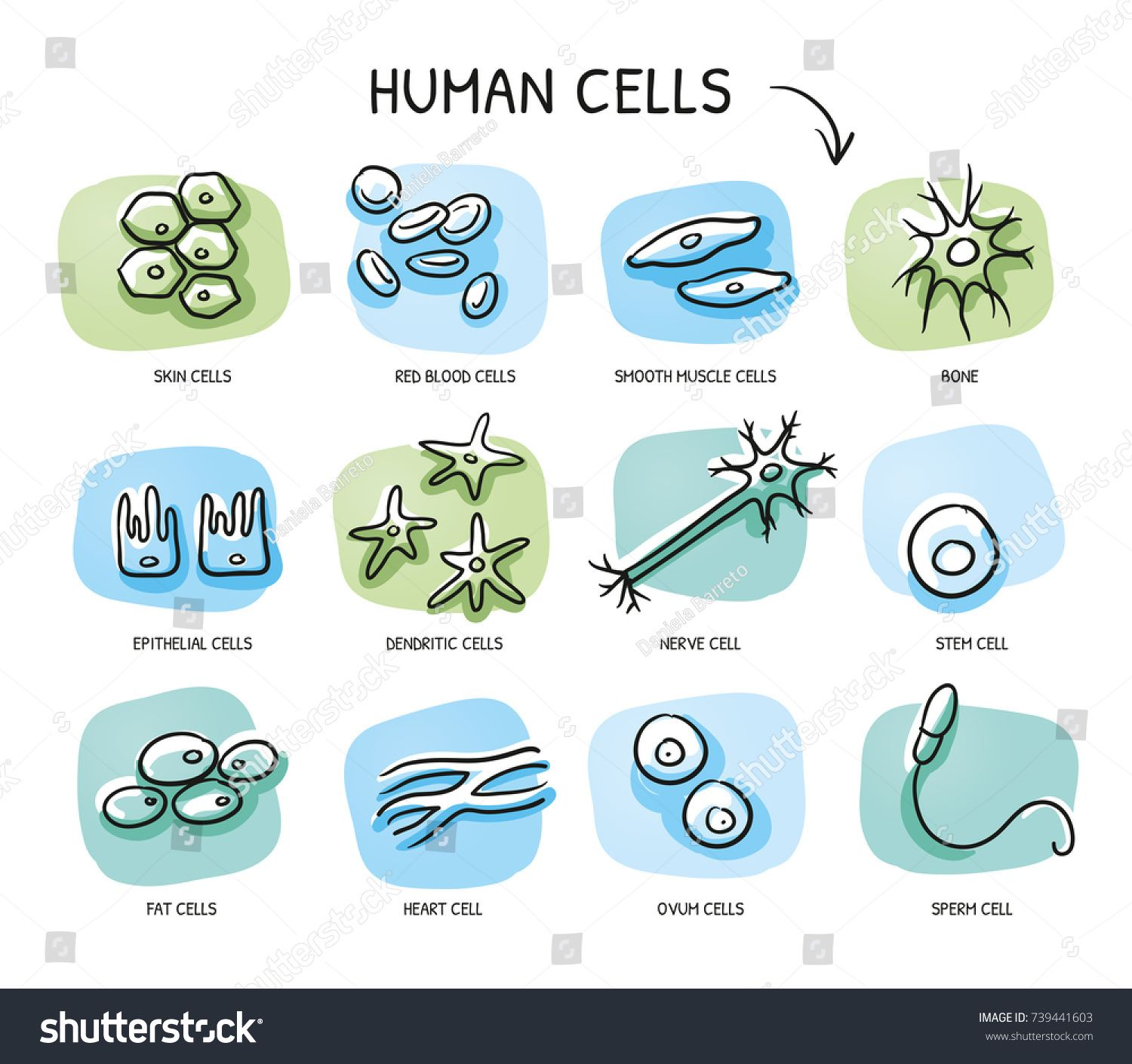 graphic free Cells clipart hand drawn. Pin on science .