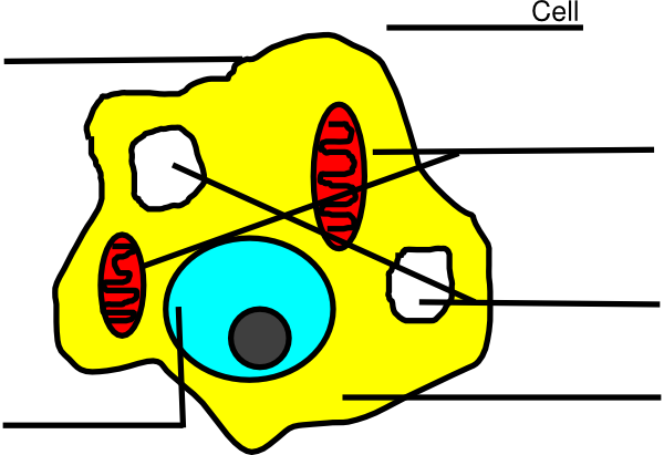 banner free download Animal cell clipart. Basic diagram unlabeled clip