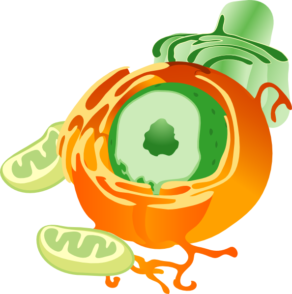 graphic stock Animal cell clipart. Chunk clip art at
