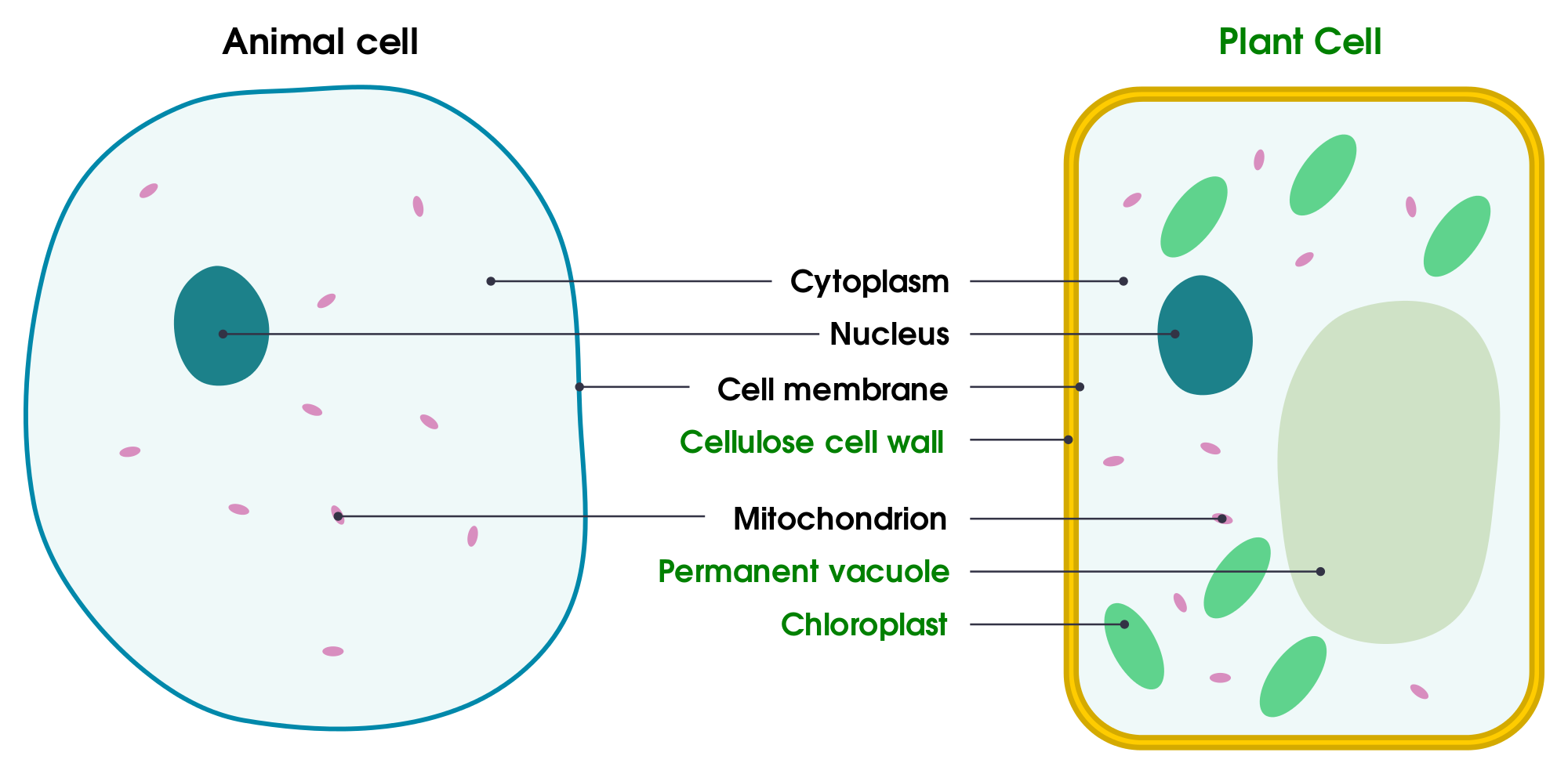 picture black and white Cells clipart organism. Simple plant cell drawing.