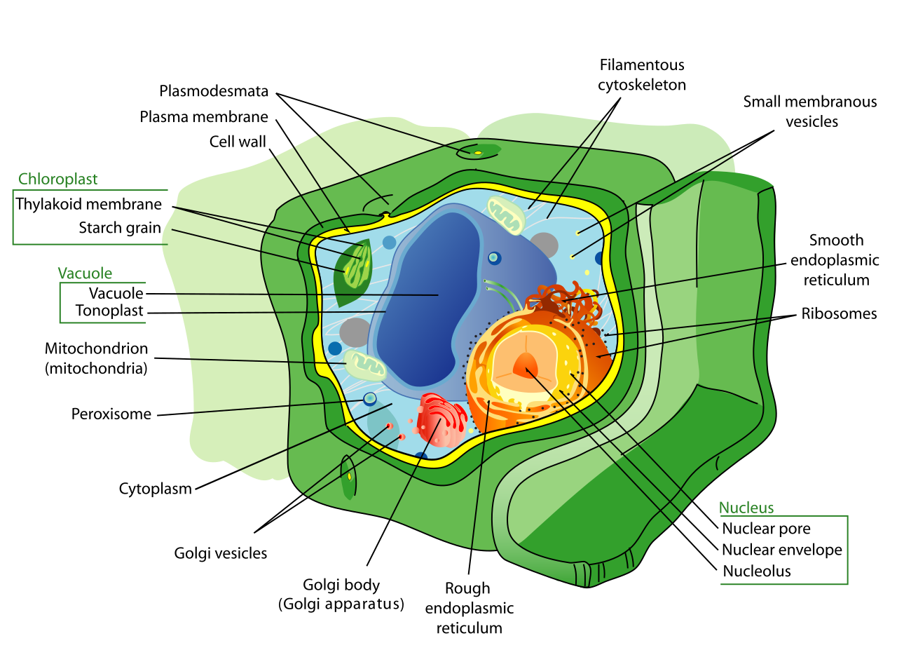 clip art black and white stock Plant cell