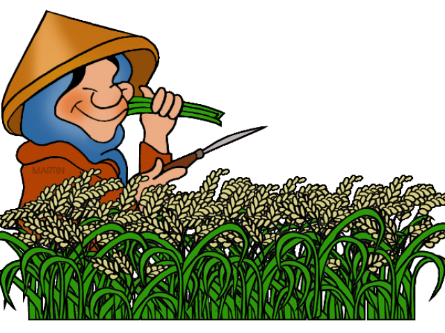 banner royalty free stock Rice free on dumielauxepices. Cereal clipart palay.