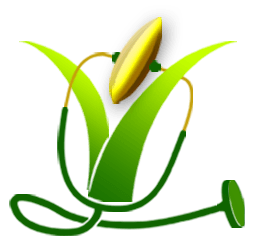image transparent stock Cereal clipart palay. Plants free on dumielauxepices.