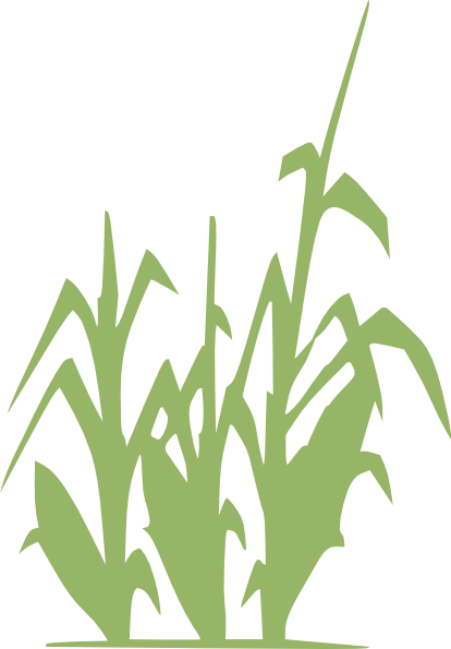image transparent stock Plants free on dumielauxepices. Cereal clipart palay.