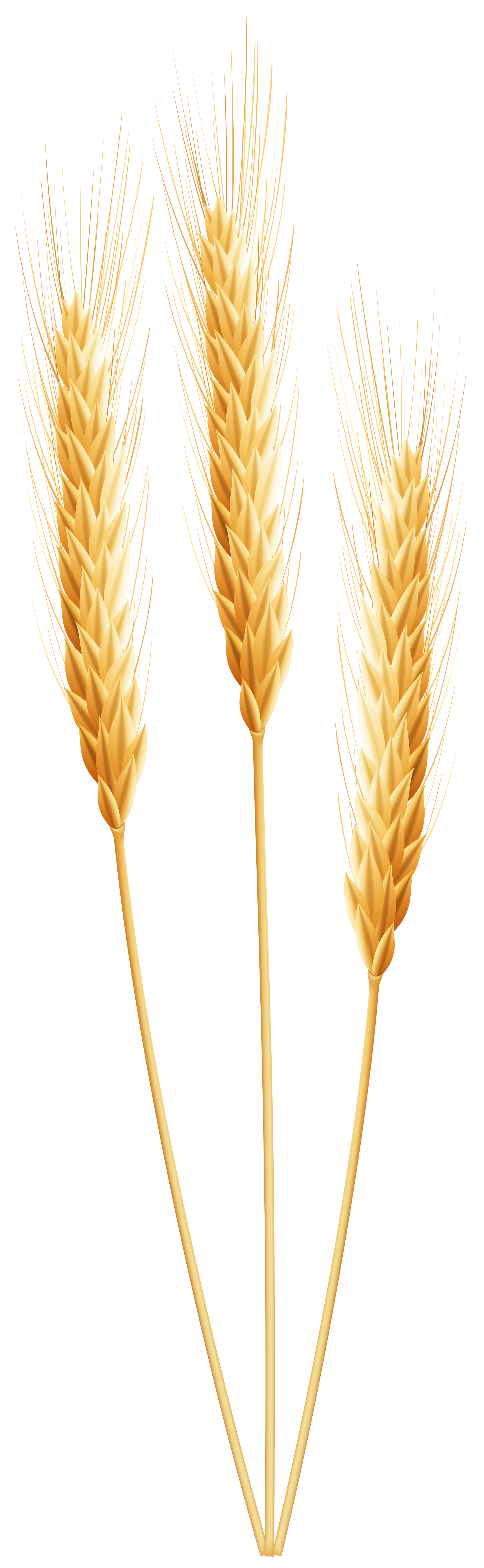 svg transparent library Wheat border clipart. Png clip art image