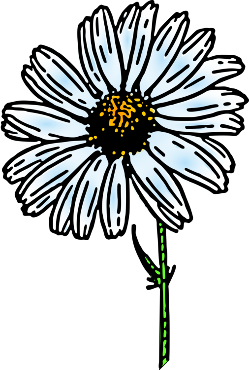 jpg transparent stock Flower Common daisy Drawing Daisy family Nature story free