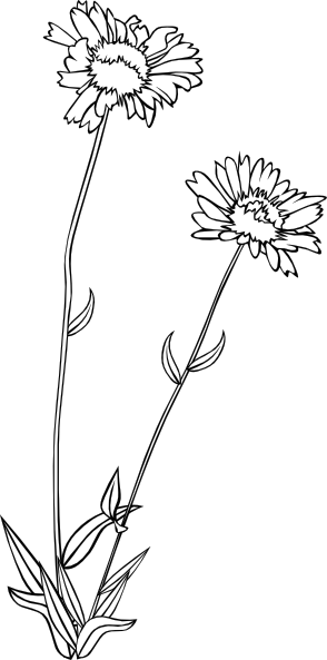 clip library stock Wild Flower Drawing at GetDrawings