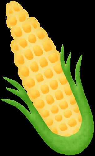 stock Corn on the cob
